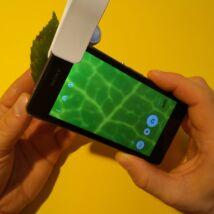 Mikroszkóp mobiltelefon kamerájára - vizsgálat: növények levele felépítése